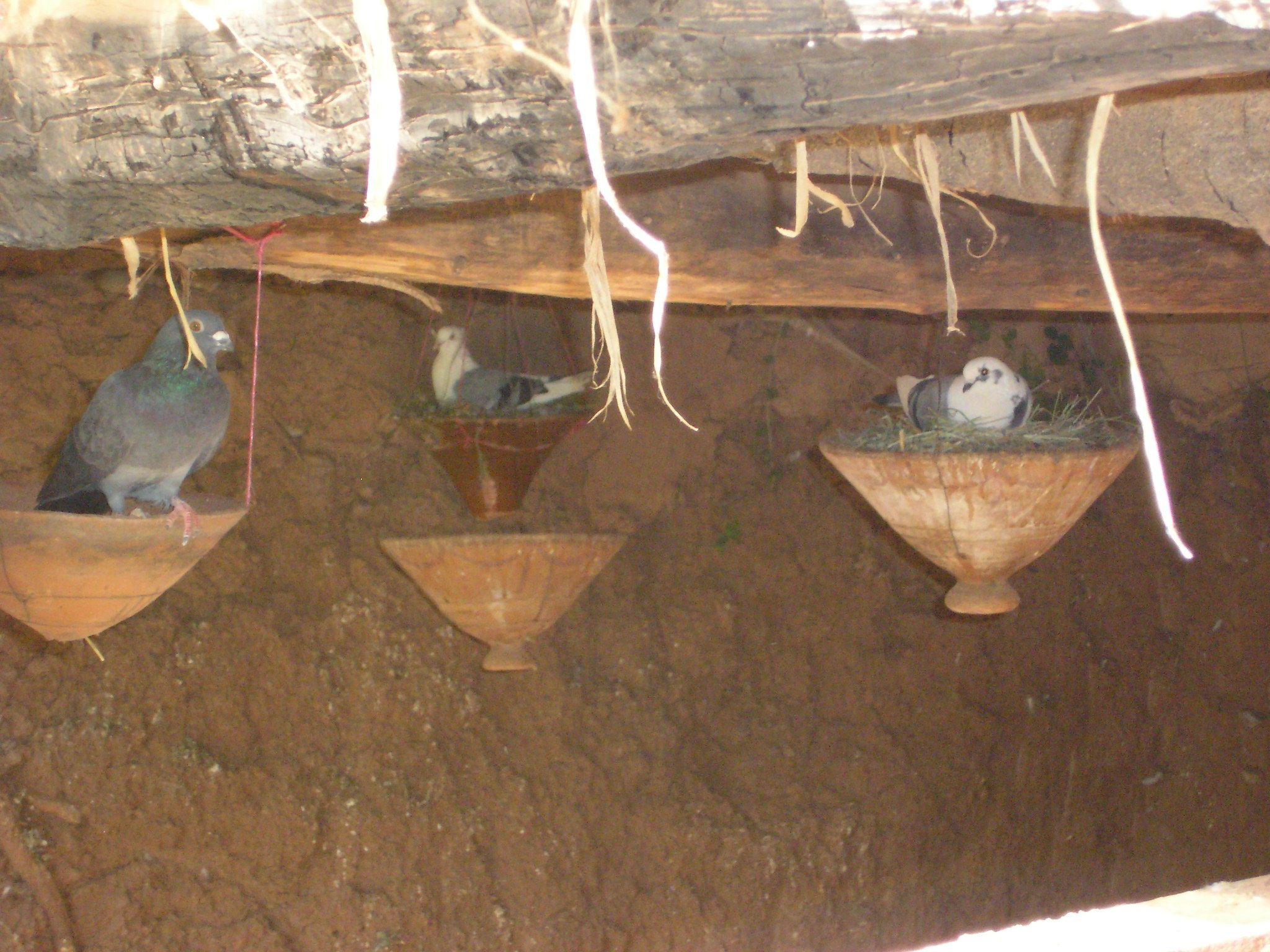 Marrakech nid d 39 pigeons - Comment faire fuir les pigeons ...